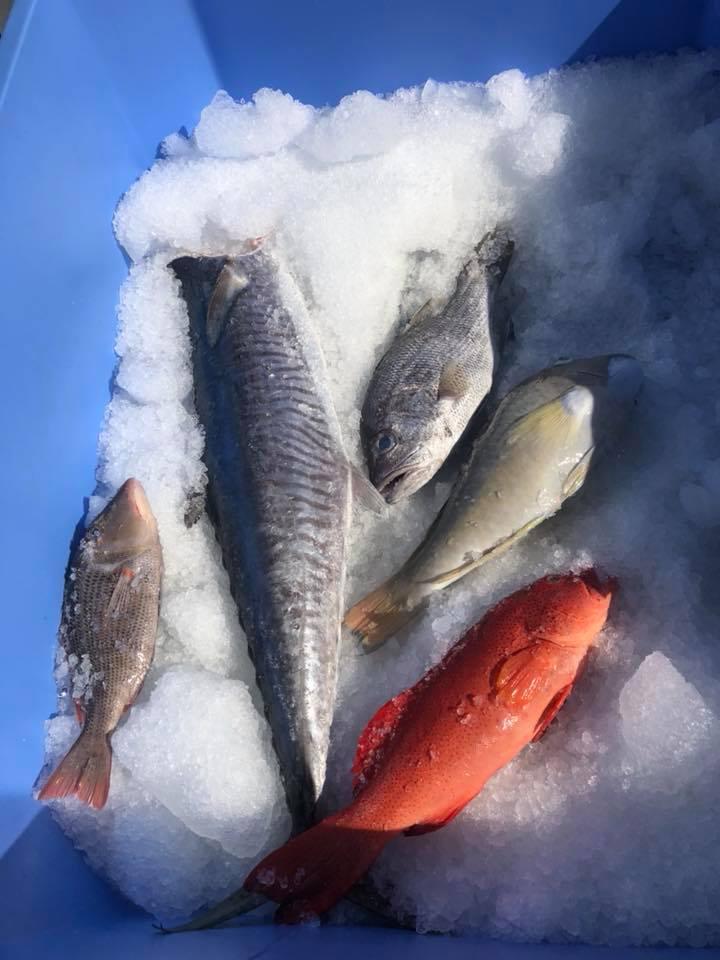 Fresh_fish_on_ice-2