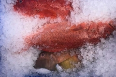 Fresh_fish_on_ice
