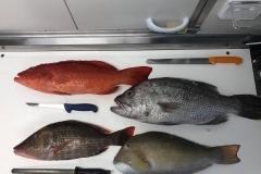 WA_Market_Fresh_Fish_on_the-_chopping_block